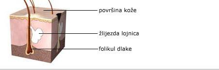 dr marija boskovic - akne - kamedon