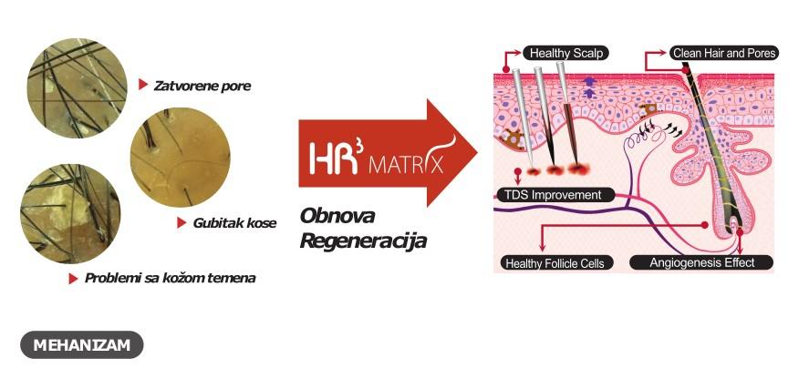 dr marija boskovic - hr3 matrix genosys