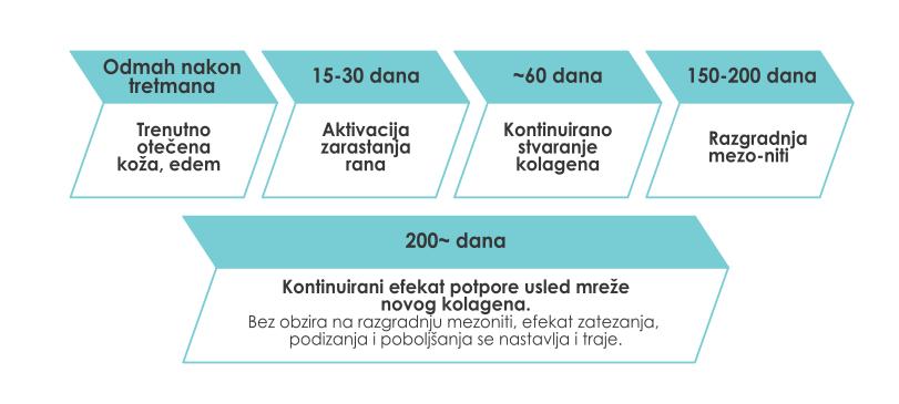 dr marija boskovic - mesotrax - stadijumi delovanja